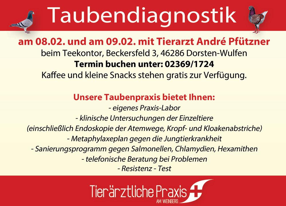 taubendiagnostik2019